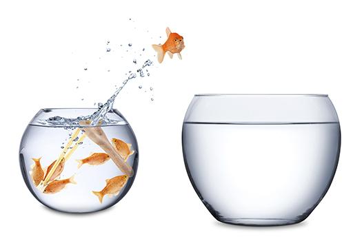 fishes in a slingshot teamwork concept